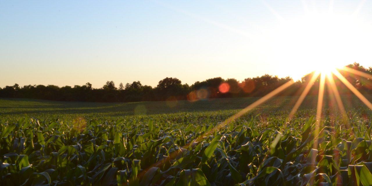 Sunrise of Crop Field
