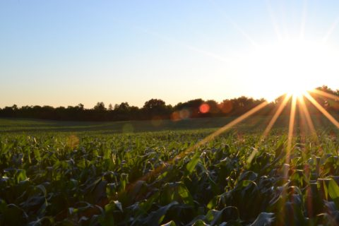 Sunrise of Crop Field